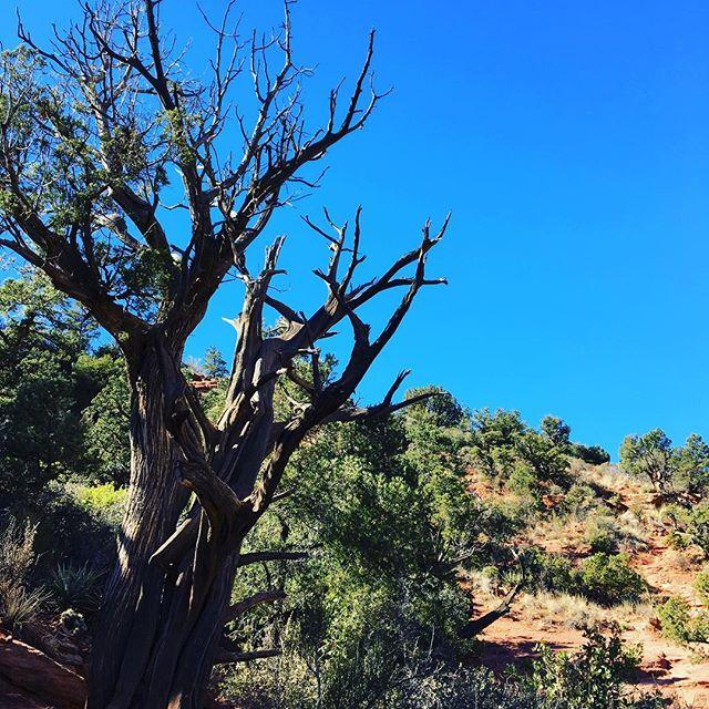 #sedonavortex #treeshuggingeachother #lovely - from Instagram