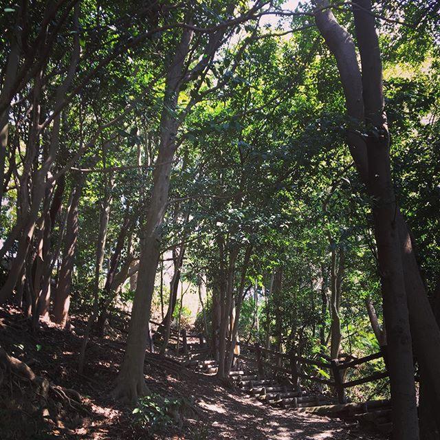 #trees #nearshrine Trees near the Kakinomoto shrine. - from Instagram