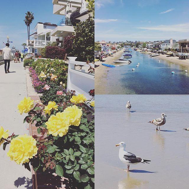#balboaisland #costamesaca Adorable Balboa Island!! ニューポートビーチから2分間フェリーに乗って行く、バルボア島という小さな可愛い島に行ってきました - from Instagram