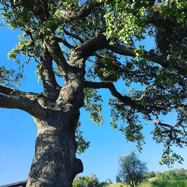 #solotraveler #henrywcoestatepark Henry W Coe State Park Campground. I loved it!https://m.facebook.com/anne0710 - from Instagram