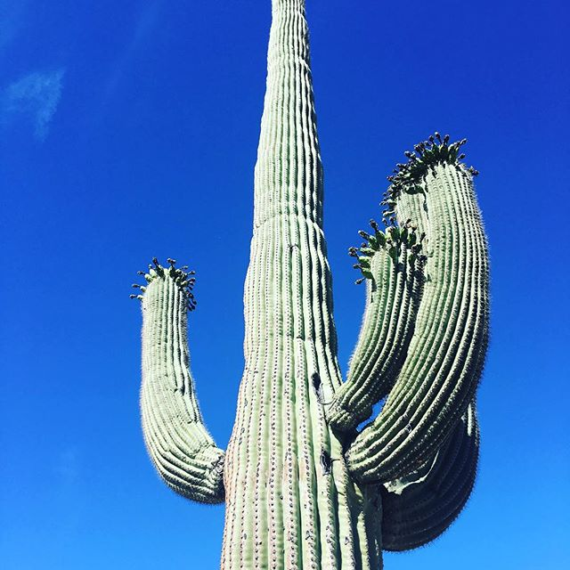 #solotraveler #saguaronationalpark #banzai Cute;)https://m.facebook.com/anne0710 - from Instagram
