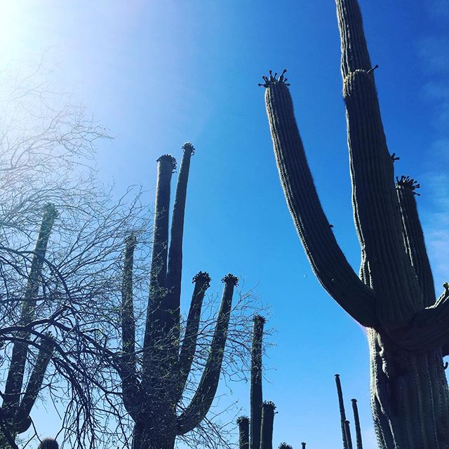 #solotraveler #saguaronationalpark I love cactus! Saguaro drives me crazy;)https://m.facebook.com/anne0710 - from Instagram