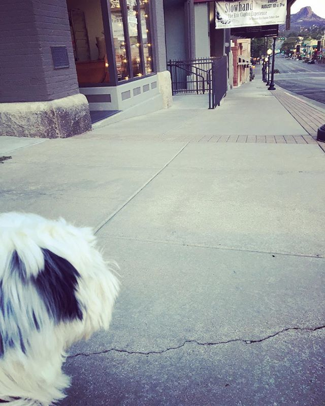 #tibetanterrier #puppy #downtownprescottaz - from Instagram