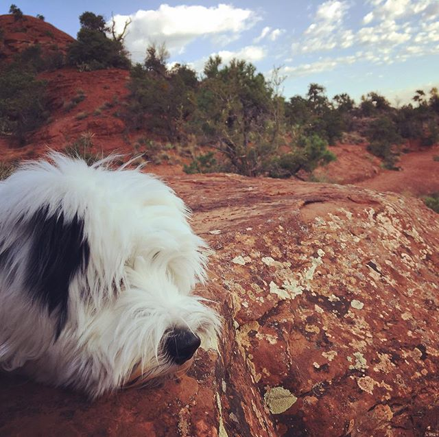 #bellrockvortex #sedona #tibetanterrier #puppy - from Instagram