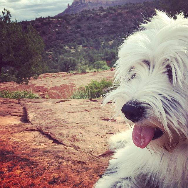#tibetanterrier #cathedralrock #sedonaaz - from Instagram
